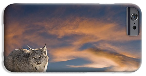 Animals iPhone Cases - Sunset Warmth iPhone Case by Wildlife Fine Art