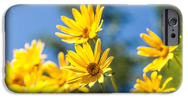 Pasture iPhone Cases - Sunshine iPhone Case by Chad Dutson
