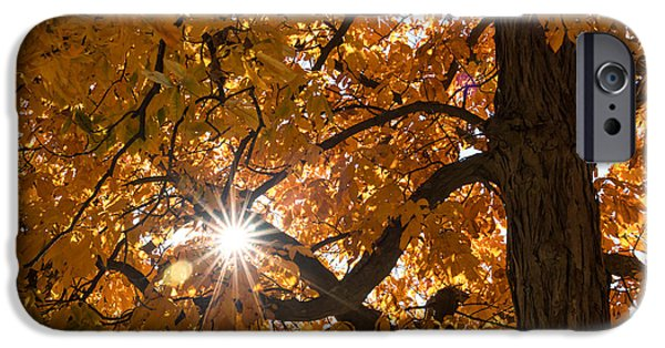 Fall Colors Photographs iPhone Cases - Sunshine Gold iPhone Case by Ana V  Ramirez