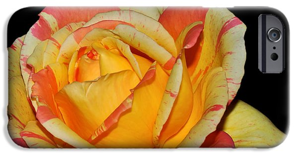 Gold Rose iPhone Cases - Sunshine Rose iPhone Case by Kaye Menner