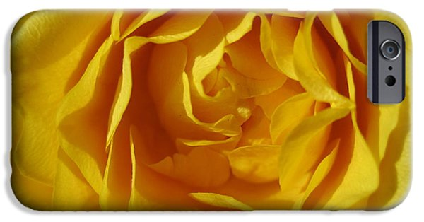 Flora Drawings iPhone Cases - Sunshine Yellow Rose iPhone Case by Tara  Shalton
