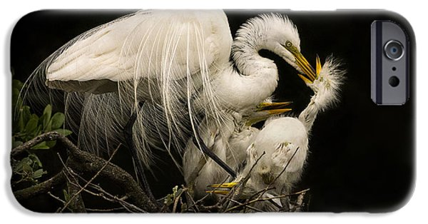 Baby Bird iPhone Cases - Suppertime iPhone Case by Priscilla Burgers