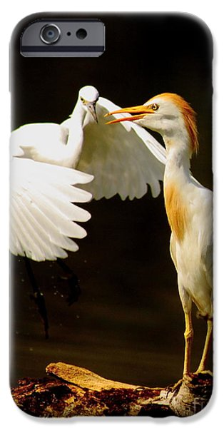Cattle Egret iPhone Cases - Suprised Cattle Egret iPhone Case by Robert Frederick