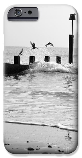 Incoming Tide iPhone Cases - Surprised Seagulls iPhone Case by Anne Gilbert
