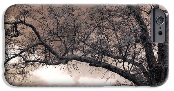 Tree Art Print iPhone Cases - Surreal Fantasy Gothic South Carolina Oak Trees iPhone Case by Kathy Fornal