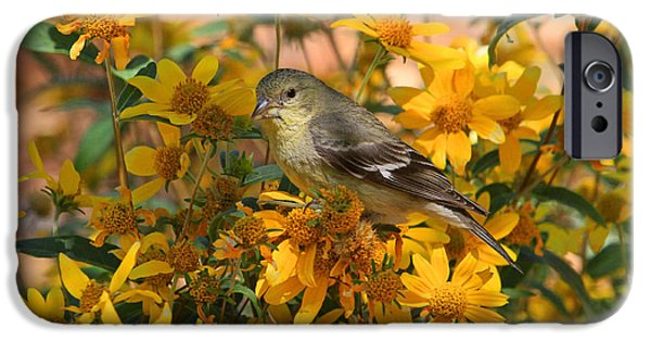 Finch iPhone Cases - Surrounded by Gold iPhone Case by Donna Kennedy