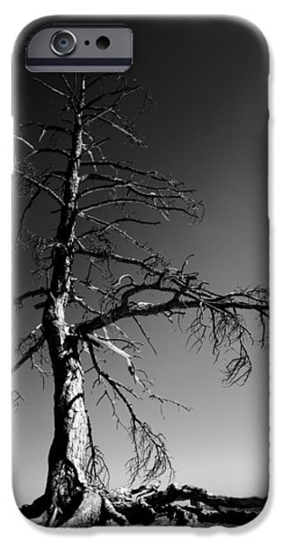Pine Tree iPhone Cases - Survival Tree iPhone Case by Chad Dutson