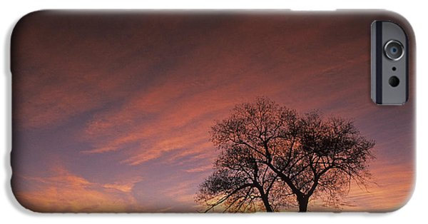Contour Farming iPhone Cases - Susies Tree iPhone Case by Latah Trail Foundation