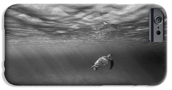 Under Water. Nature iPhone Cases - Suspended animation. iPhone Case by Sean Davey