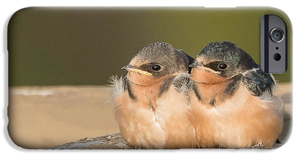Swallow Chicks iPhone Cases - Swallow Chicks iPhone Case by Yeates Photography