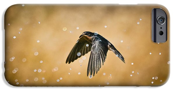 Barn Swallow iPhone Cases - Swallow In Rain iPhone Case by Robert Frederick