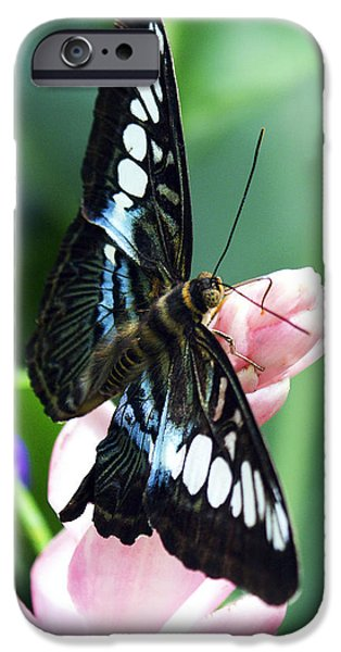Blue Swallowtail iPhone Cases - Swallowtail Butterfly iPhone Case by Marilyn Hunt