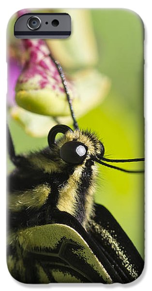 Swallowtail Butterfly iPhone Case by Priya Ghose