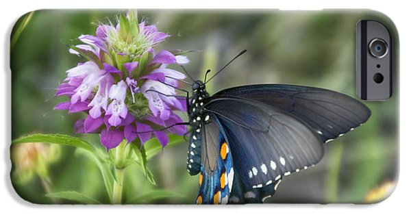 Blue Swallowtail iPhone Cases - Swallowtail Butterfly V1 iPhone Case by Douglas Barnard