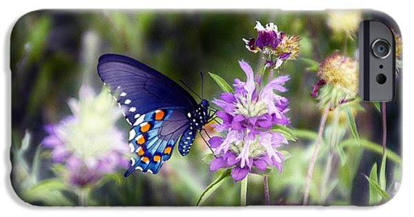 Blue Swallowtail iPhone Cases - Swallowtail Butterfly V2 iPhone Case by Douglas Barnard
