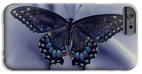 Blue Swallowtail iPhone Cases - Swallowtail Crashes Bar-B-Q iPhone Case by Robert Frederick