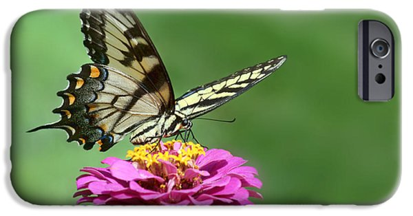 Blue Swallowtail iPhone Cases - Swallowtail Visit - 2011 iPhone Case by Nikolyn McDonald