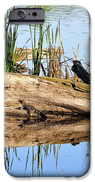 Swamp Scene iPhone Case by Al Powell Photography USA
