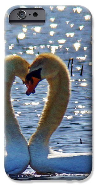 Concord Massachusetts iPhone Cases - Swan 001 iPhone Case by Jeff Stallard