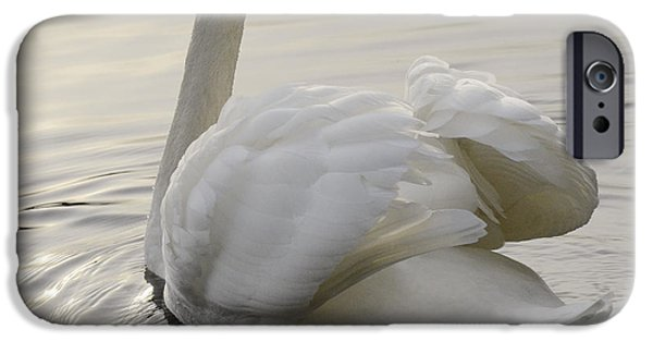 Swans... iPhone Cases - Swan Elegance iPhone Case by Bob Christopher