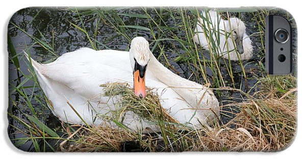 Baby Bird iPhone Cases - Swan Family in Dutch Canal iPhone Case by Carol Groenen