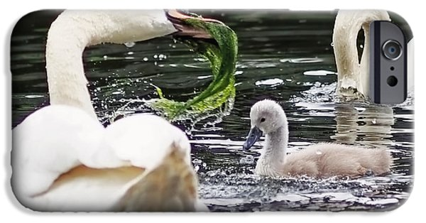 Bird Photographs iPhone Cases - Swan Family Meal iPhone Case by Rona Black