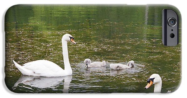 Yorktown Virginia iPhone Cases - Swan Family Squared iPhone Case by Teresa Mucha