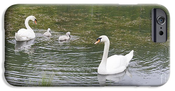 Yorktown Virginia iPhone Cases - Swan Family iPhone Case by Teresa Mucha