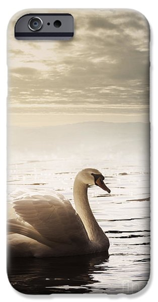 Animal Cards Pyrography iPhone Cases - Swan iPhone Case by Jelena Jovanovic
