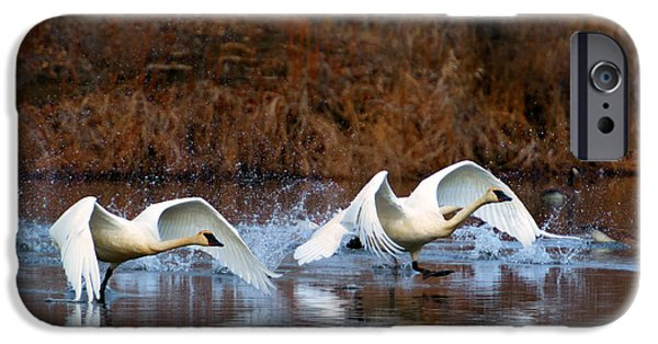 Swans... Photographs iPhone Cases - Swan Lake iPhone Case by Mike  Dawson