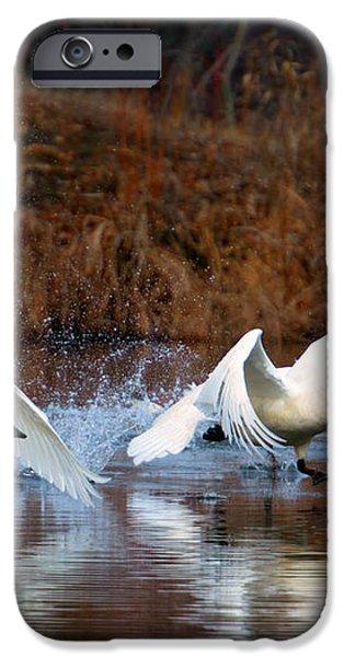 Swan Lake iPhone Case by Mike  Dawson