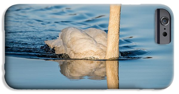 Swans... iPhone Cases - Swan iPhone Case by Paul Freidlund