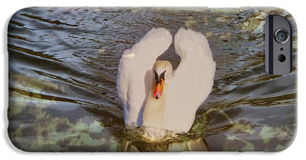 Swans... iPhone Cases - Swan Reflections iPhone Case by Cheryl Young