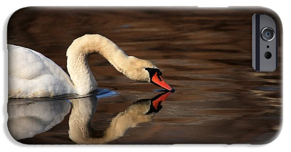 Swans... iPhone Cases - Swan Reflects iPhone Case by Karol  Livote