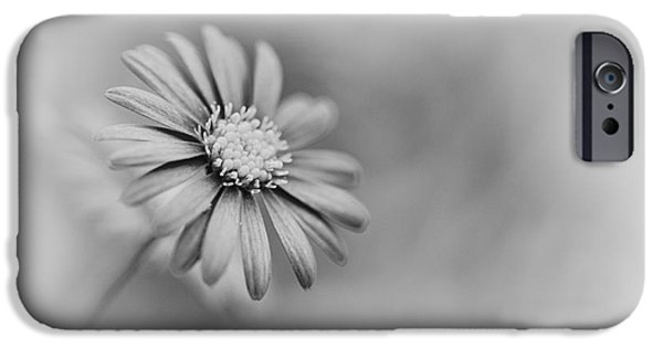 Swans... Photographs iPhone Cases - Swan River Daisy Monochrome iPhone Case by Tim Gainey