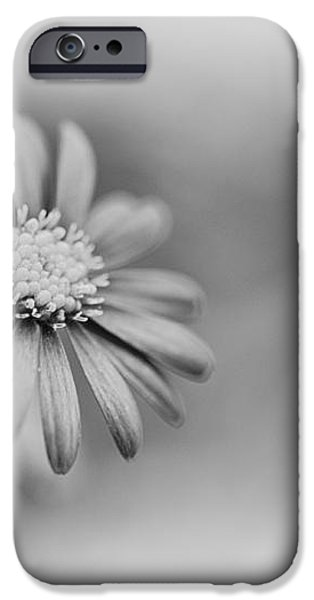 Swan River Daisy Monochrome iPhone Case by Tim Gainey