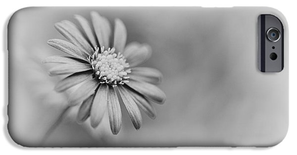 Swans... iPhone Cases - Swan River Daisy Monochrome iPhone Case by Tim Gainey