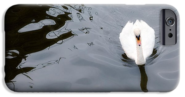 Swans... Photographs iPhone Cases - Swan Song iPhone Case by Rebecca Cozart