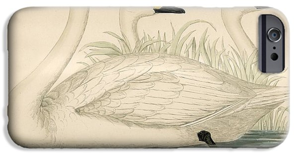 Swans... iPhone Cases - Swans iPhone Case by Beverley R. Morris