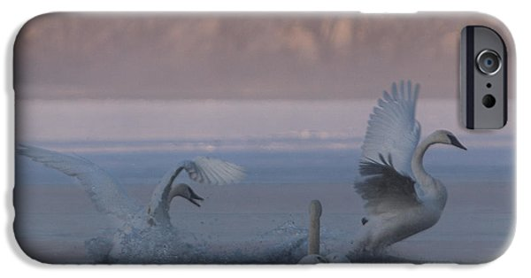 Hudson River iPhone Cases - Swans Chasing iPhone Case by Patti Deters