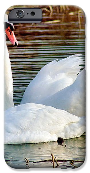 Swans iPhone Case by Gary Heller