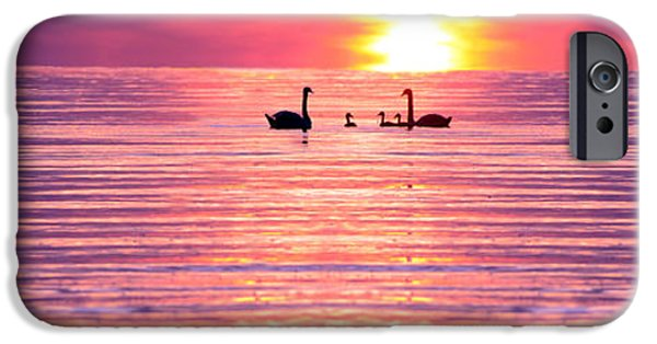 Swans... iPhone Cases - Swans on the Lake iPhone Case by Jon Neidert
