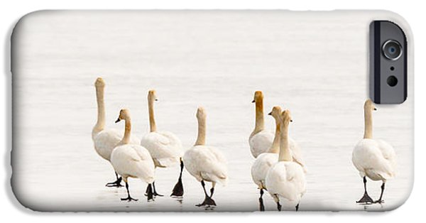 Swans... iPhone Cases - Swans On Thin Ice iPhone Case by Yeates Photography