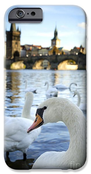 Swans... Pyrography iPhone Cases - Swans on Vltava river iPhone Case by Jelena Jovanovic