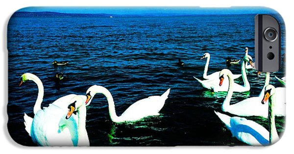Swans... Pyrography iPhone Cases - Swans iPhone Case by Pepe Z