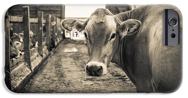Brown Swiss iPhone Cases - Sweet Alfalfa iPhone Case by Edward Fielding