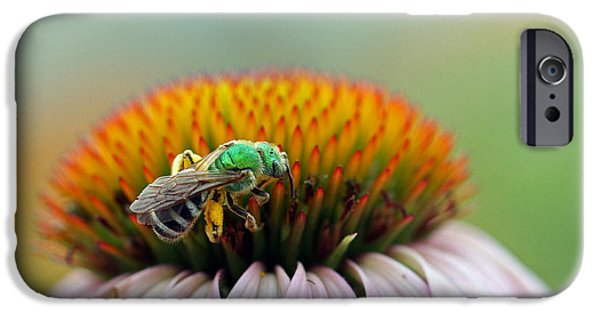 Sweat iPhone Cases - Sweet Bee iPhone Case by Juergen Roth
