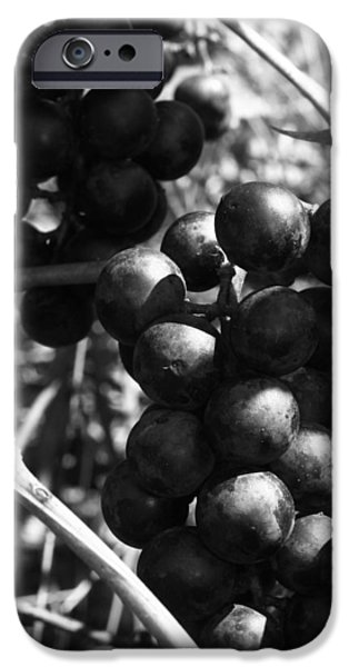 Concord Grapes iPhone Cases - Sweet Bunch - Concord II iPhone Case by RC Hagy
