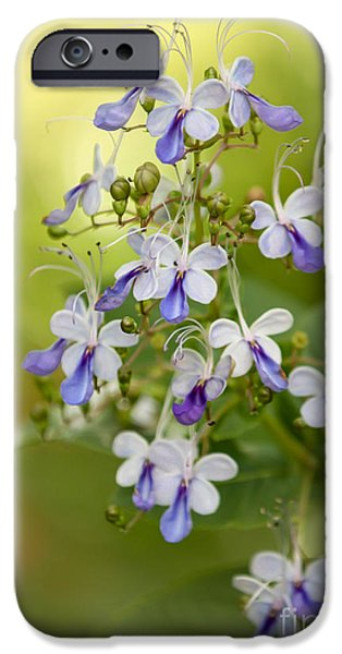 Florida Flowers Photographs iPhone Cases - Sweet Butterfly Flowers iPhone Case by Sabrina L Ryan