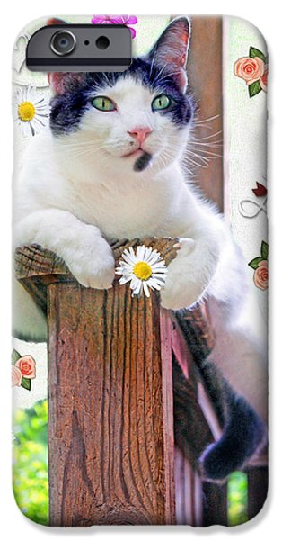 Photos Of Cats iPhone Cases - Manipulated Cat Photo iPhone Case by Constance Lowery